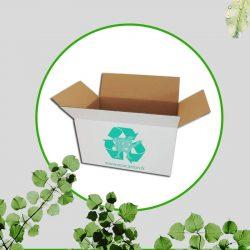carton écologique
